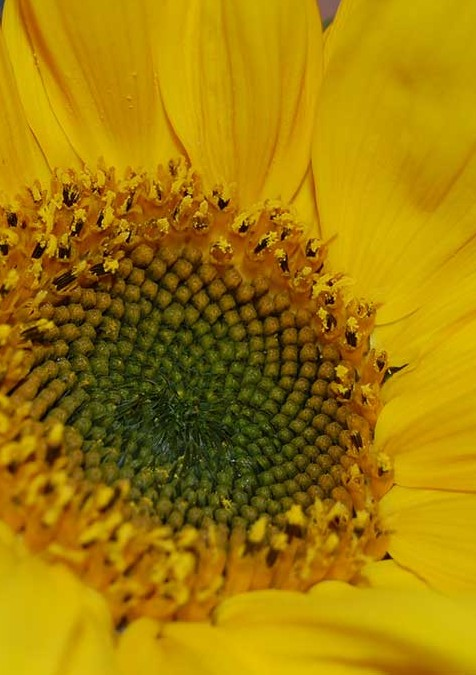 What is Phishing?   Member Resource Page.   Closeup photo of sunflower.